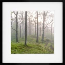 Woodland Wonders Square framed print