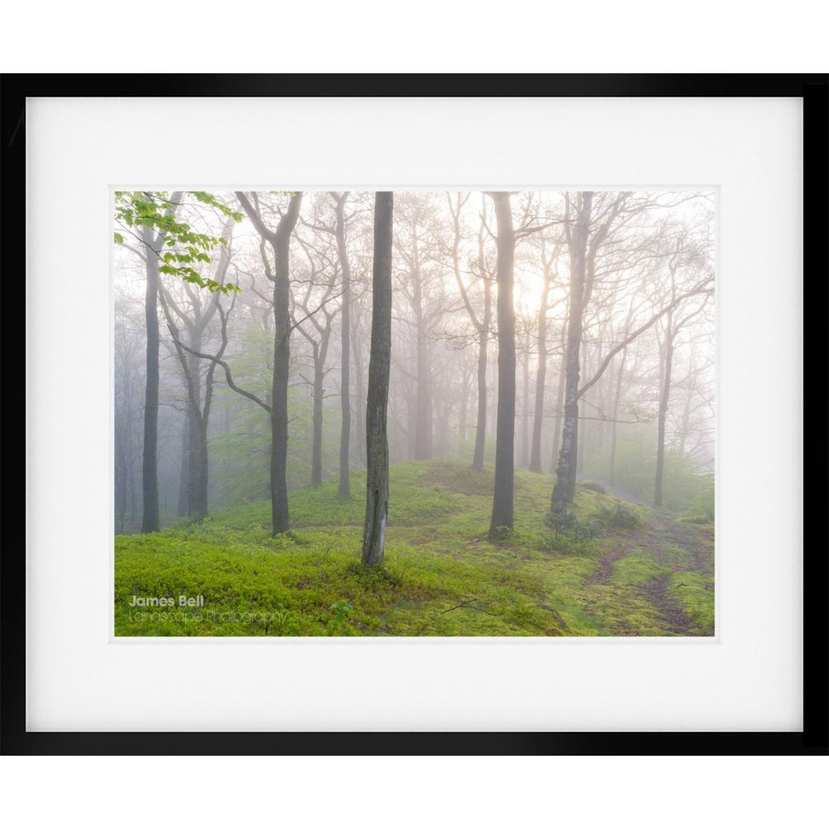 Woodland Wonders framed print