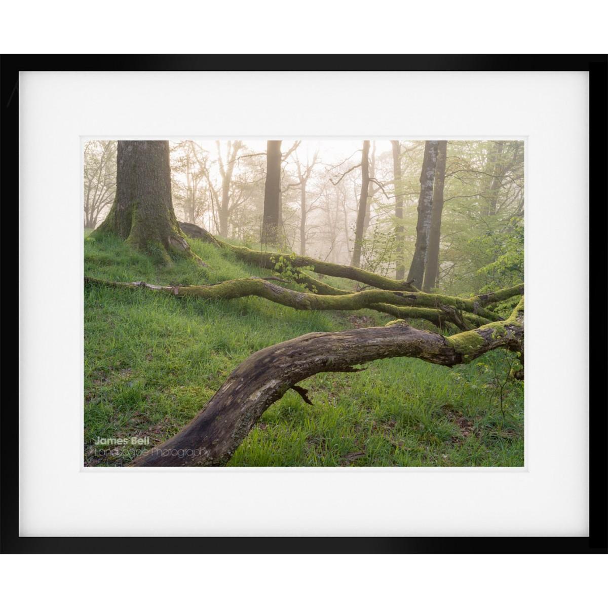 Fallen Limbs framed print