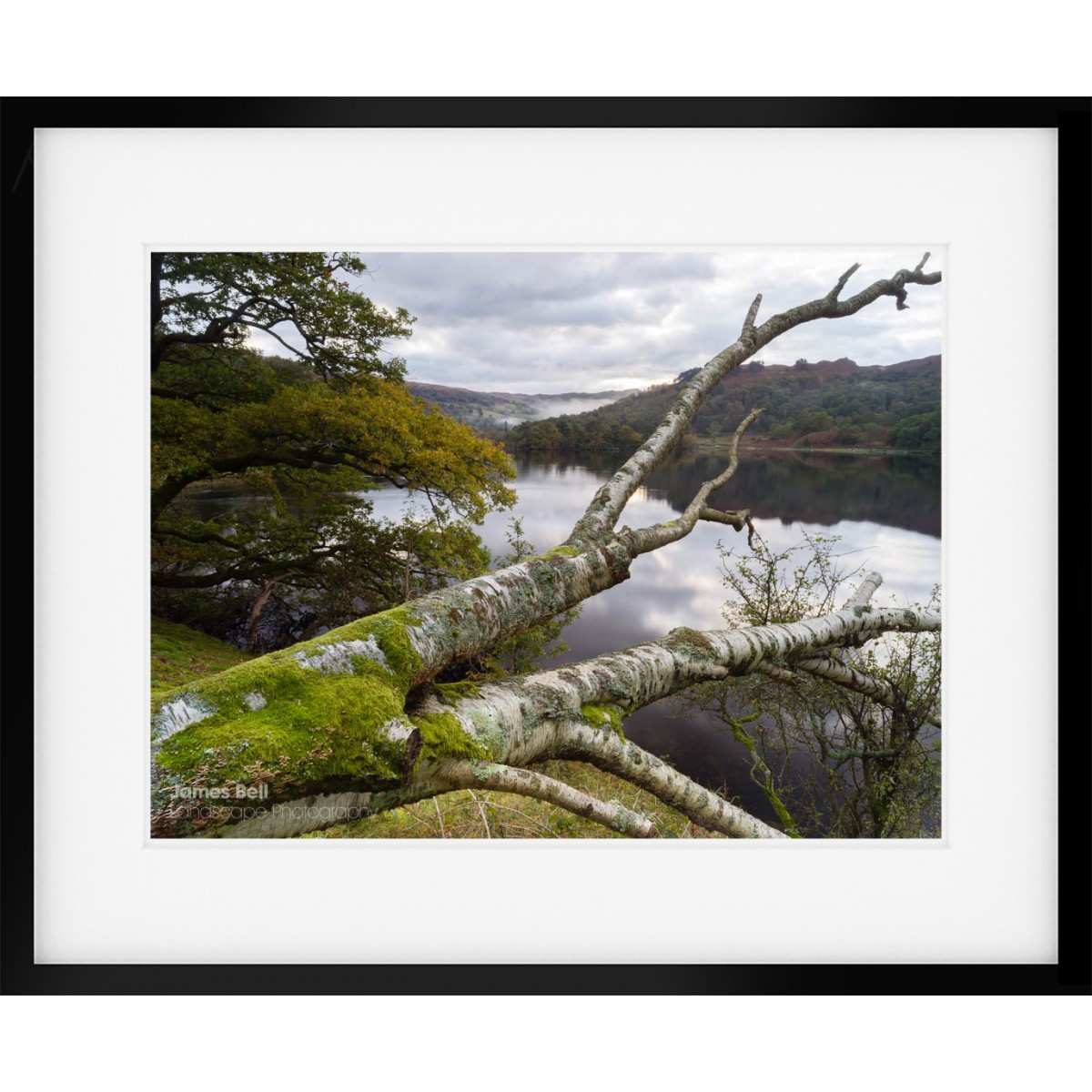 Rydal Fallen Tree framed print