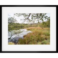 Rydal Through the Trees framed print