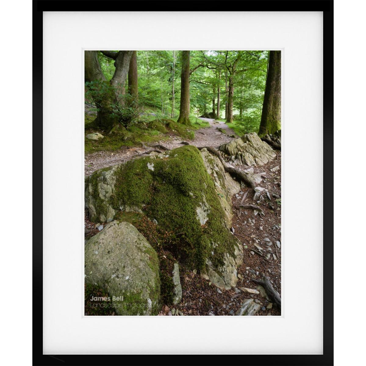 Penny Rock Woods framed print