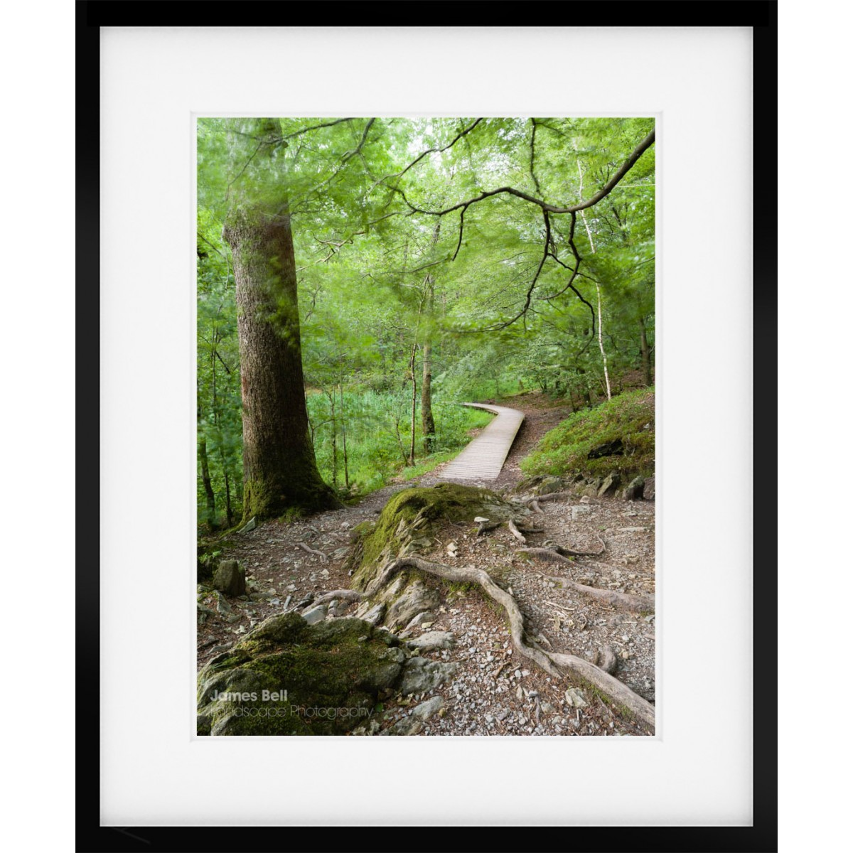 Woodland Boardwalk framed print