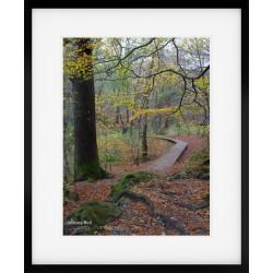 Woodland Boardwalk Autumn framed print
