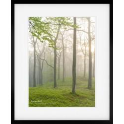 Woodland Wonders Portrait framed print