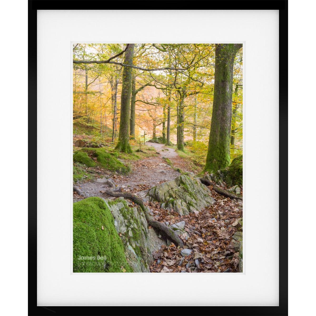 Woodland Light on Grasmere framed print