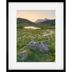Cotton Grass at Blea Tarn framed print