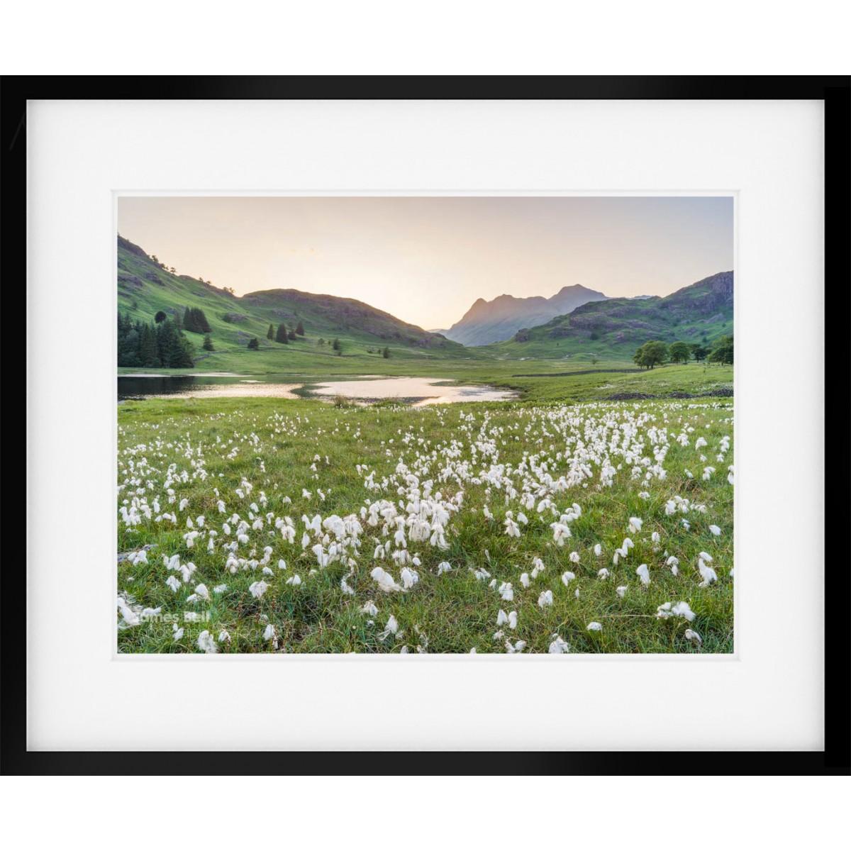 Cotton Grass at Blea Tarn II framed print