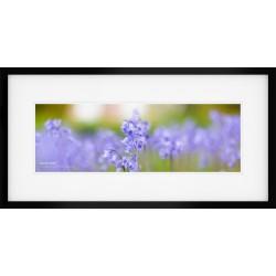 Lake District Bluebells framed print