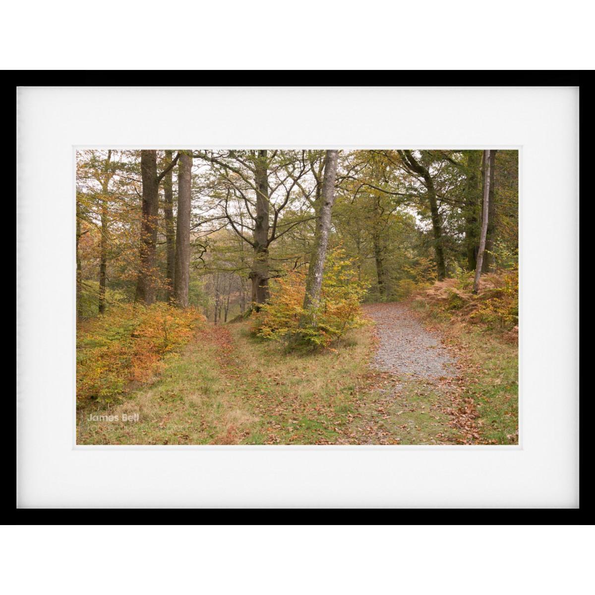 Lake District woodland framed print