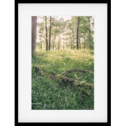 Spring Lake District Woodland framed print