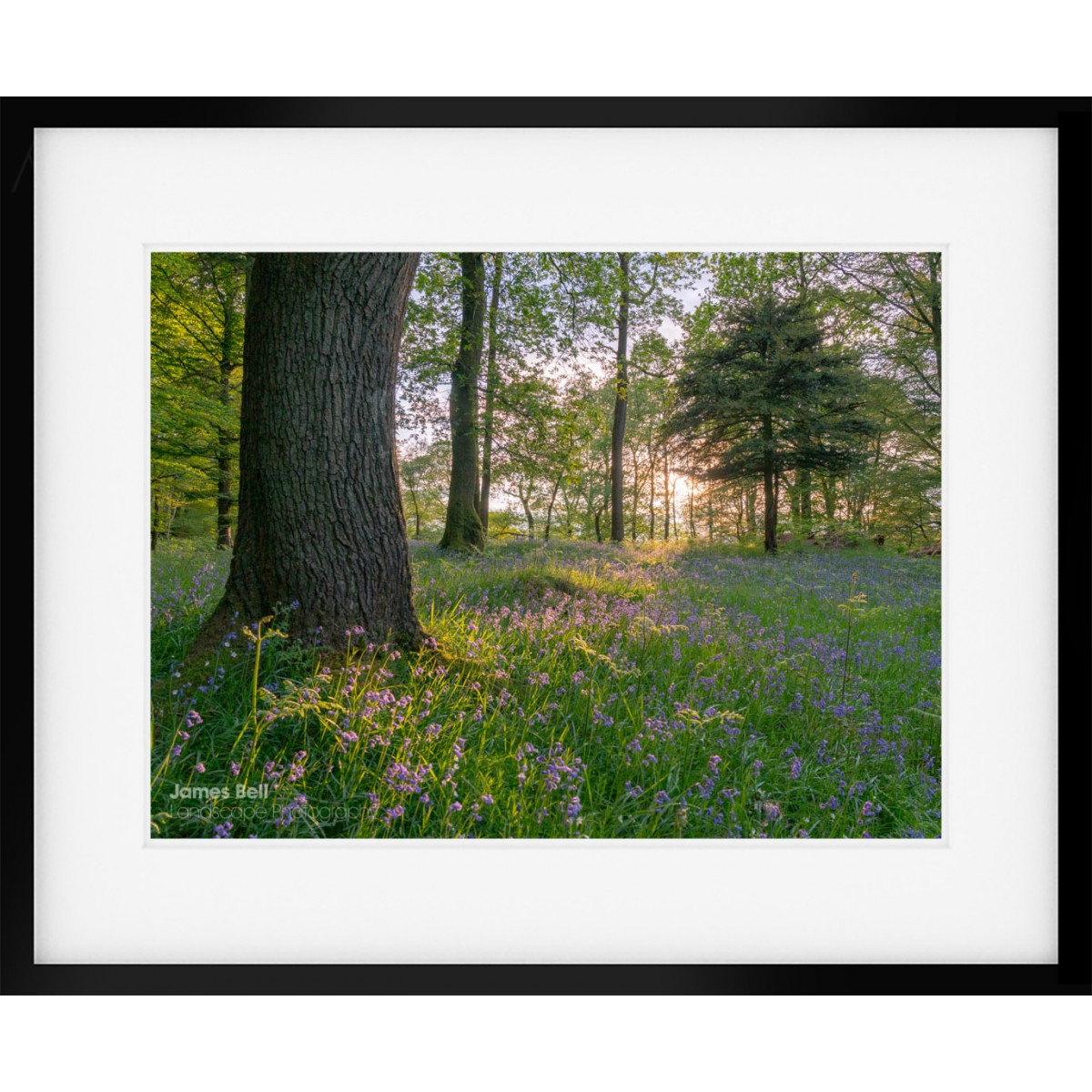Bluebell wood in the Lake District Framed Print