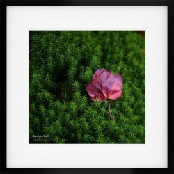 Autumn leaf in a Lake District woodland print