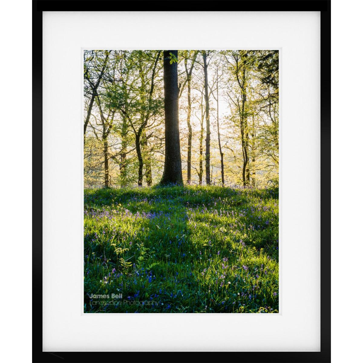 Lake District Bluebell wood framed print