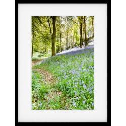 Bluebell Path Framed Print