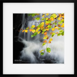 Framed Print of an Autumn Beech Tree at Thirlmere