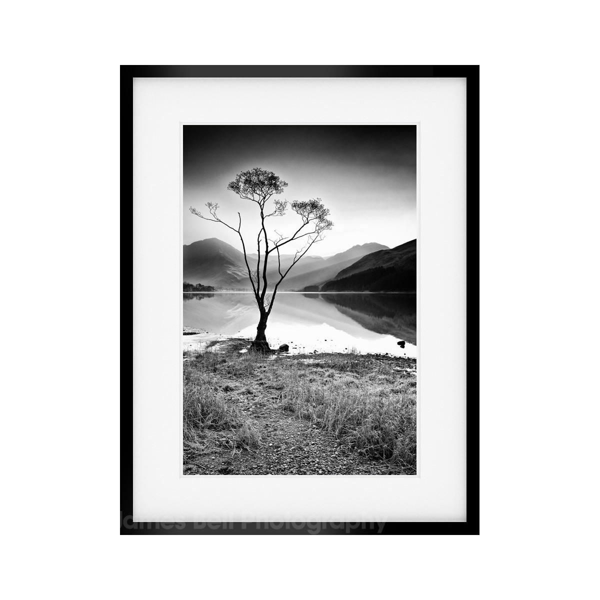 Buttermere Tree Mono