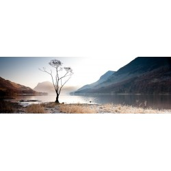 Buttermere Tree View