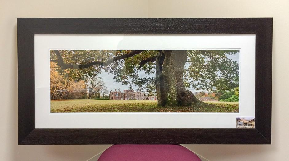 The Kings Oak Framed Print