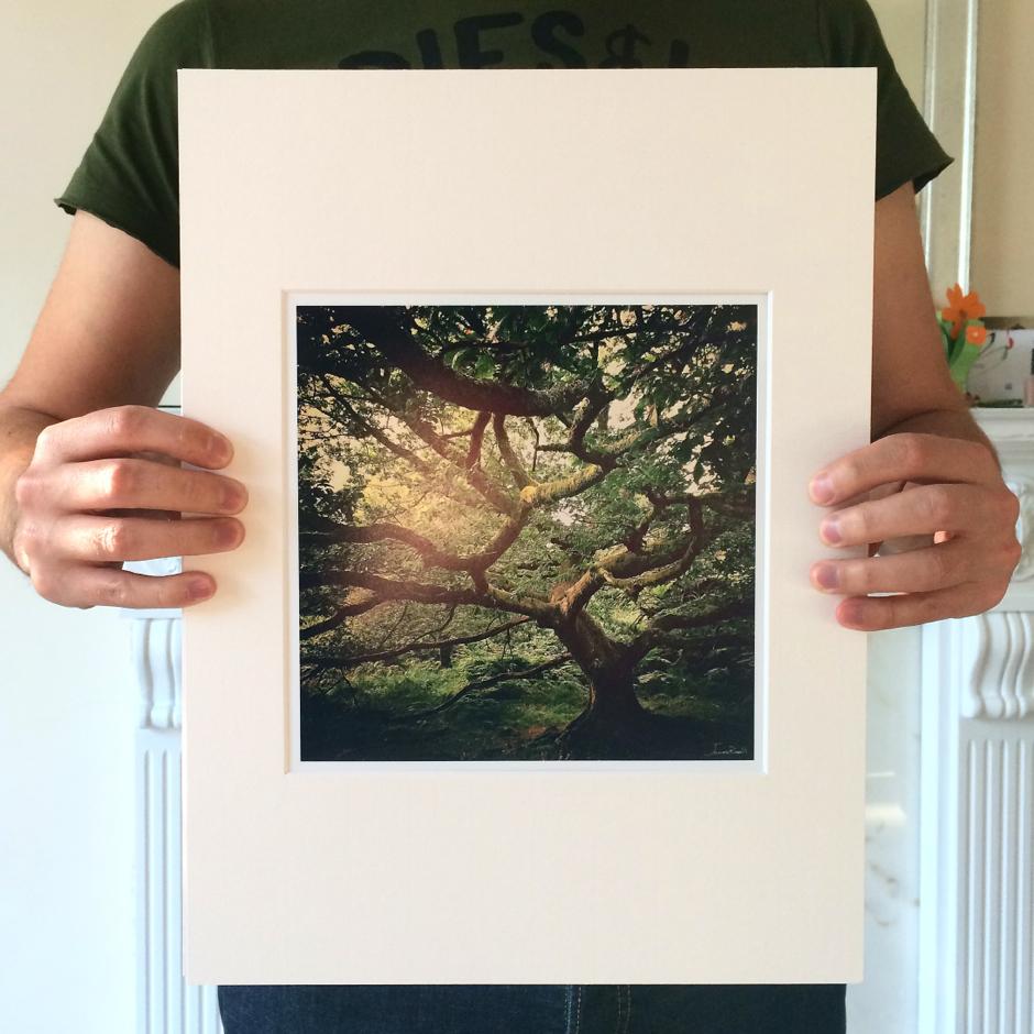 A Lake District Oak Tree Landscape Print
