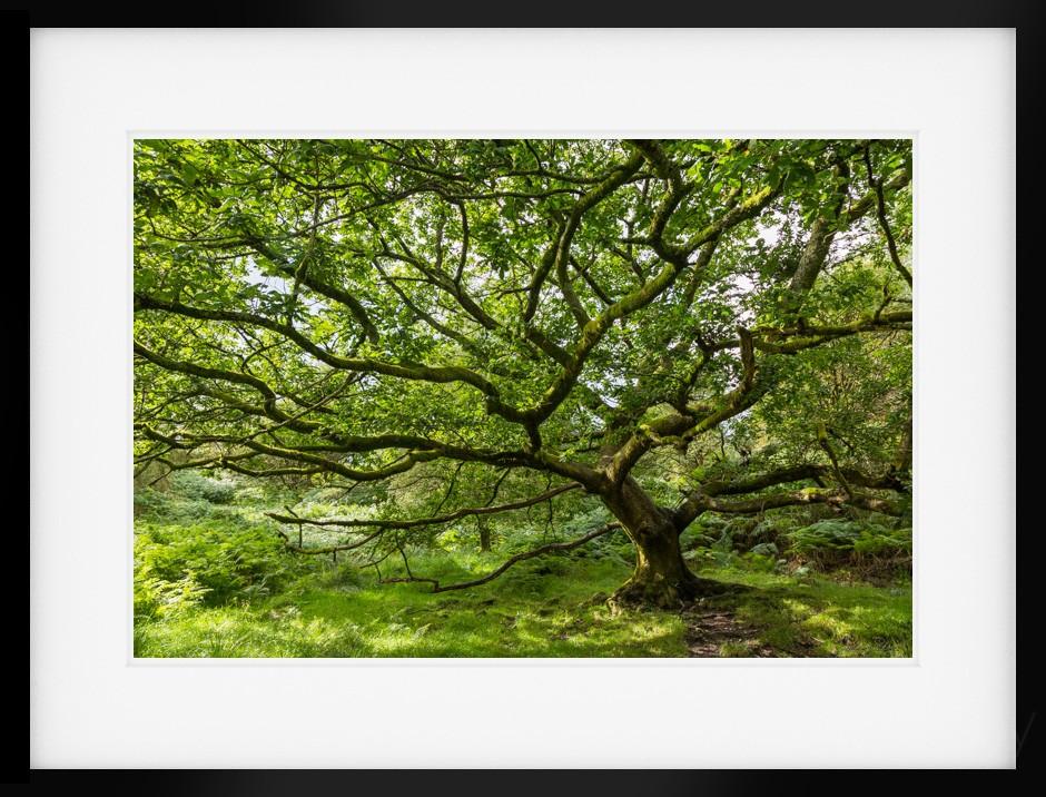 summer-oak-print-by-james-bell