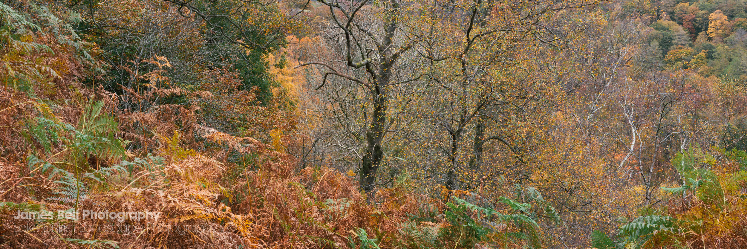 Autumn on Holme Fell in the Lake District