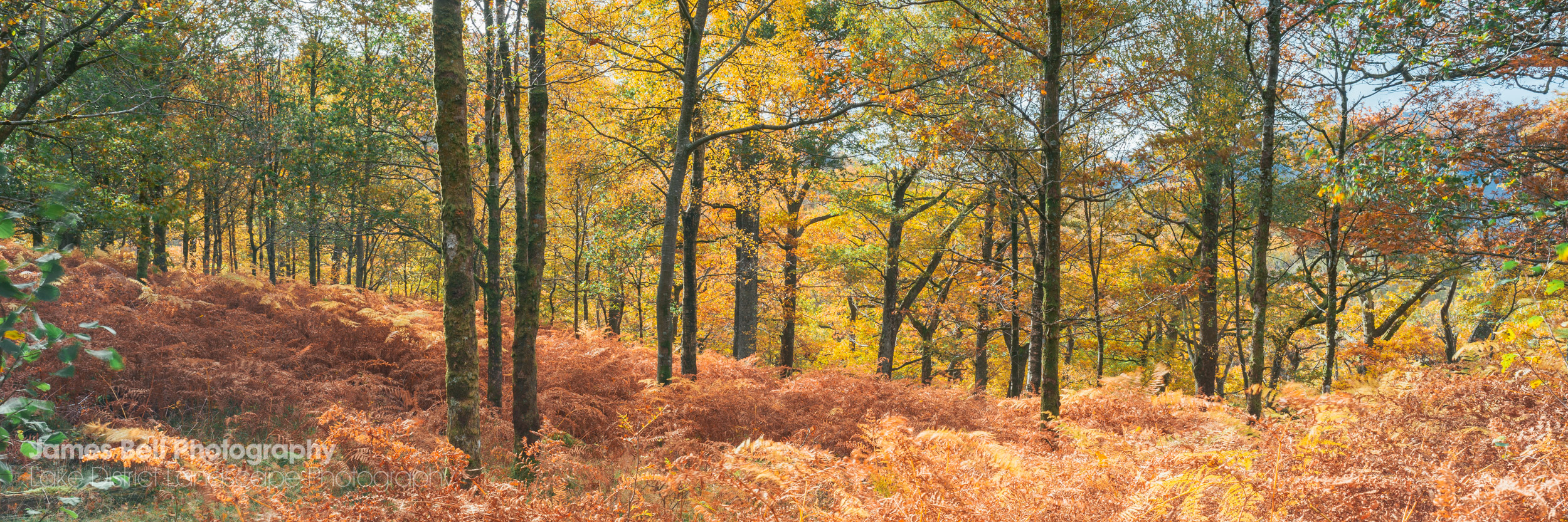 Borrowdale Autumn Woodland