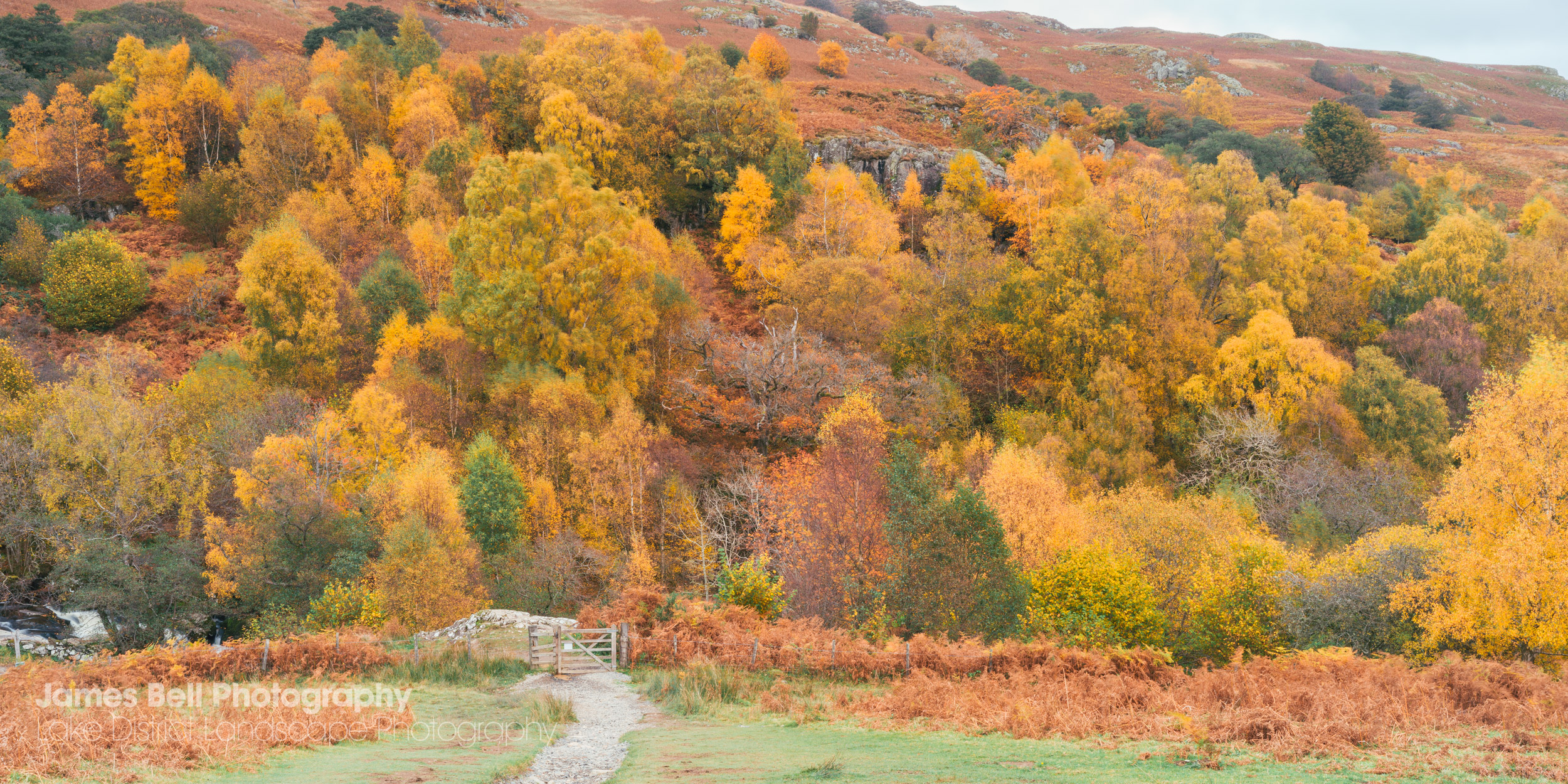 Framed prints of Autumn at Gowbarrow Park in the Lake District