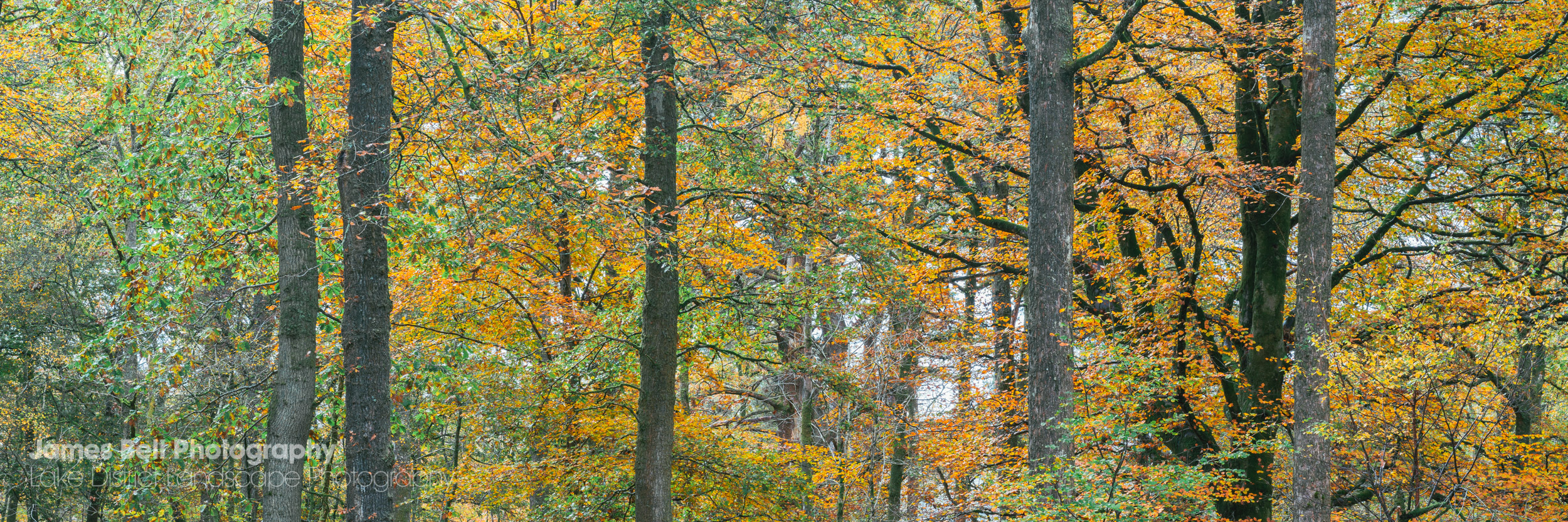 Autumn Landscape Photography Prints from the Lake District