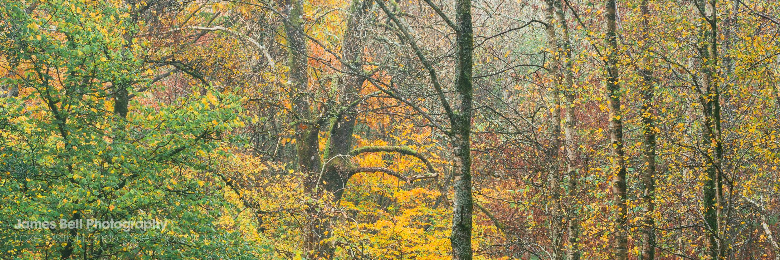 Lake District Autumnal Woodland Print