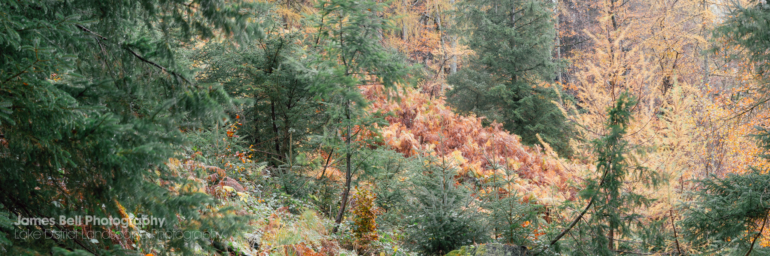 Autumn at Thirlmere in the Lake District